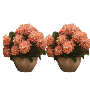 Apricot florals $49 for one $99 for set